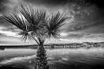 Palm on sentry duty along the Colorado River