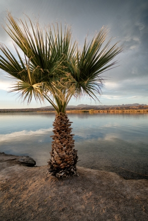 Bordering palm as the Colorado river drifts by