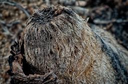 Fury Stump