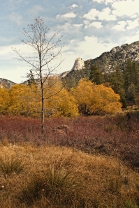 Fall day looking toward Lily Rock, Idyllwild, CA