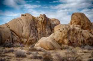 Classic look of Joshua Tree National Park