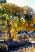 _DSF0567 Fall Colors III